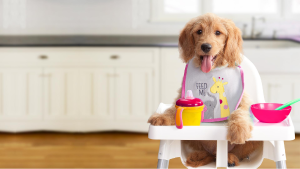 How to Choose the Healthiest Budget Dog Food