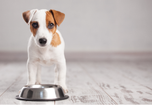 How to choose good wet food for puppies