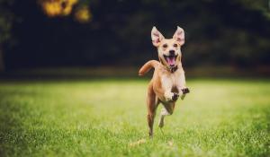 GNC Pet Supplements Naturals