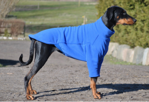 Your Dog Apparel Style Guide