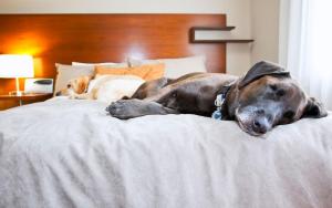Best Dog Bed for Large Dog