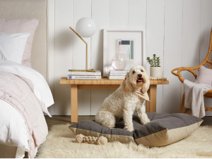 Selecting the Best Dog Beds and Furniture
