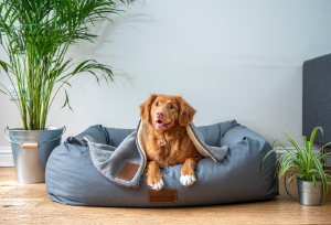 Why Should Buy Heavy Duty Dog Beds?