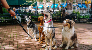 Your Best Dog Leashes Buying Guide