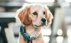 Best Dog Collars And Leashes For Your Dog