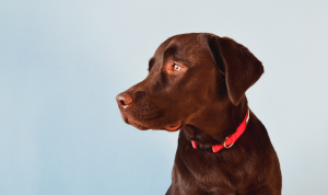 The Best Dog Collars Buying Guide