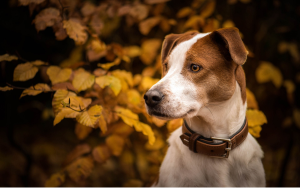 The Best Leather Dog Collars