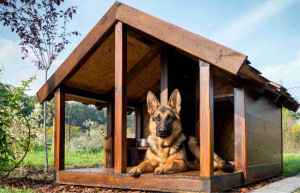 So, what is the best cheap wood dog house?