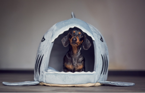 Get Your Pup Comfy: Best Dog Crate, Dog Houses, and More