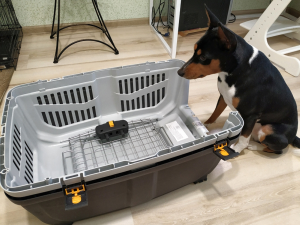 What type of plastic Petmate dog crates are there
