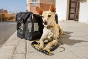 Nothing but the Best Dog Crate for Your Pup