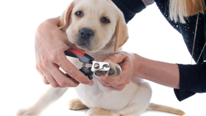 The perfect pet nail trimmer