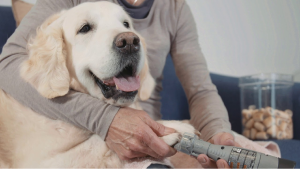 Best Dog Grooming Tools & Supplies