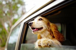 Best Dog Travel Accessories