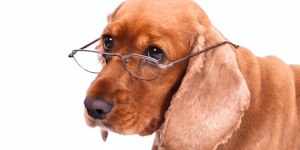 A New Way to Calculate Dog Age - A More Accurate Method