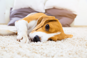 Can a Dog be Depressed?