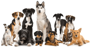 Summing It Up — Does a Dog Size Matter?