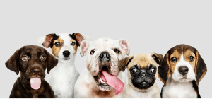 Dog Breeds with Longest Life Spans