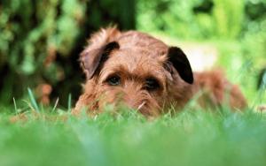 Should You Let A Dog Eat Grass?