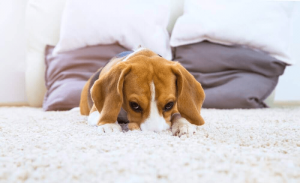 When You Should Be Concerned About Your Dog Throwing Up